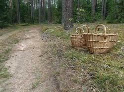 Хатынский лес